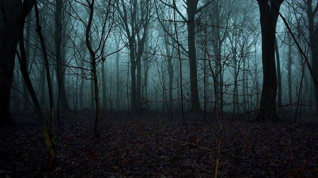 Issız bir orman
